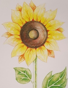 Sunflower in Colored Pencils