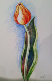 Drawing Tulips with Pencils