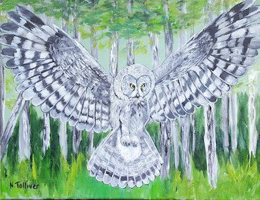 Now We Paint III Great Grey Owl (Tolliver)